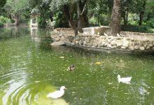Isleta de los Patos 03